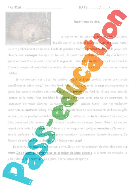 Le castor - Lecture - Texte informatif - Documentaire ...