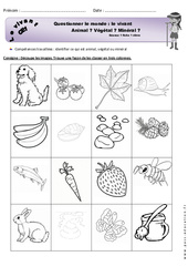 Animal, végétal ou minéral - Exercices à imprimer : 2eme Primaire