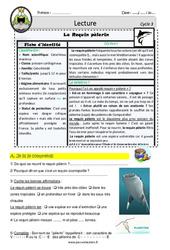 Le Requin pèlerin - Lecture - EDL - Décrochage scolaire : 4eme, 5eme, 6eme Primaire