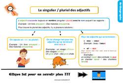 Leçon, trace écrite sur le singulier / pluriel des adjectifs au  : 2eme Primaire