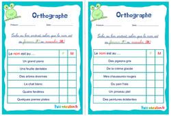 Le masculin et le féminin du nom - Rituels - Orthographe : 2eme, 3eme Primaire