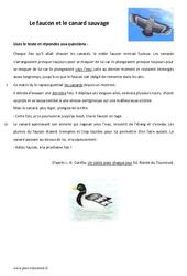 Le faucon et le canard sauvage - Lecture - Conte : 6eme Primaire
