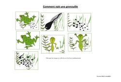 Comment nait une grenouille - Exercices - Sciences : 3eme, 4eme Primaire