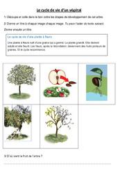 Cycle de vie d'un végétal - Le pommier - Exercices - Sciences : 3eme, 4eme Primaire