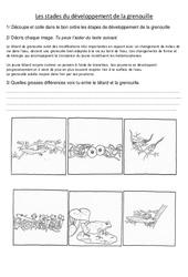 Stades du développement de la grenouille - Exercices - Sciences : 3eme, 4eme Primaire