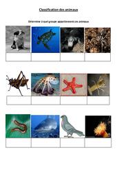 Classification des animaux - 2 - Exercices - Sciences : 4eme Primaire