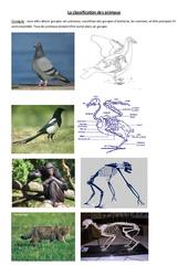 Classification des animaux - 1 - Exercices - Sciences : 4eme Primaire