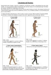 Evolution de l'homme - Exercices - Sciences : 5eme Primaire