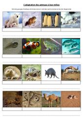 Adaptation des animaux à leur milieu - Exercices - Sciences : 4eme, 5eme Primaire