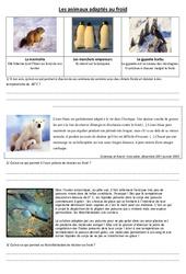 Animaux adaptés au froid - Exercices - Sciences : 4eme, 5eme Primaire