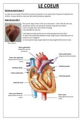 Qu'est ce que le coeur - Exercices - Sciences : 5eme Primaire