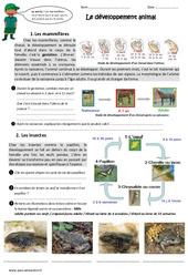 Développement animal - Exercices : 4eme, 5eme Primaire