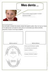 Mes dents - Exercices - Corps humain - Sciences : 2eme Primaire