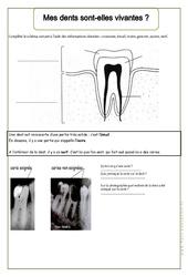 Mes dents sont - elles vivantes - Exercices - Corps humain - Sciences : 2eme Primaire