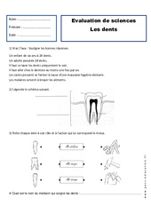 Dents - Examen Evaluation : 2eme Primaire