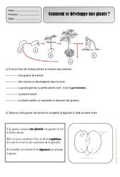 Comment se développe une plante - Les végétaux - Exercices - Découverte du monde : 2eme Primaire