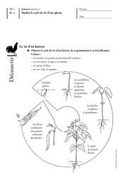 Cycle de vie d'une plante - Les végétaux - Exercices - Découverte du monde : 2eme Primaire