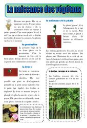 Naissance des végétaux - Les végétaux - Lecture documentaire - Découverte du monde : 2eme Primaire