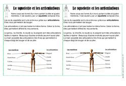 Squelette - Articulations - Corps Humain - Cours, Leçon : 2eme Primaire