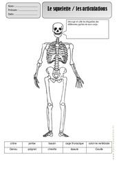 Squelette - Corps Humain - Exercices - Découverte du monde : 2eme Primaire