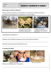 Reproduction des animaux - Monde animal - Exercices - Découverte du monde : 2eme Primaire