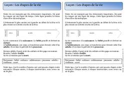 Etapes de la vie - Trace écrite - Temps - Cours, Leçon : 1ere Primaire