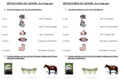 Cinq sens - Examen Evaluation : 1ere Primaire