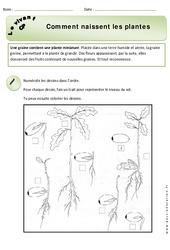 Comment naissent les plantes - Exercices - Découverte du monde : 1ere Primaire