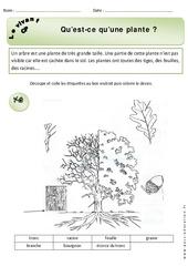 Qu'est ce qu'une plante - Exercices - Découverte du monde : 1ere Primaire