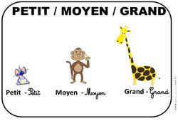 Petit - Moyen - Grand - Affichages pour la classe : 1ere, 2eme, 3eme Maternelle - Cycle Fondamental