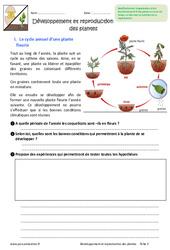 Développement et reproduction des plantes - Exercices : 6eme Primaire