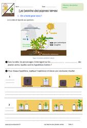 Besoins des plantes vertes - Exercices : 6eme Primaire