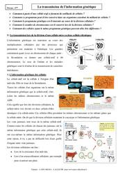 Transmission de l'information génétique - Cours - SVT : 3eme Secondaire